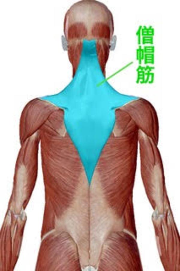 肩甲骨②腰痛の原因